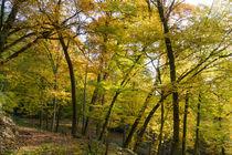 Bäume biegen sich unter den Farben des Herbstes by Ronald Nickel