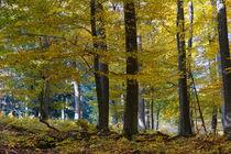 Unter bunten Bäumen by Ronald Nickel