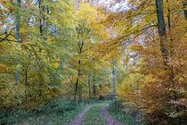 Wandern im Herbstwald by Ronald Nickel