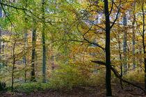 Impressionistischer Herbstwald by Ronald Nickel