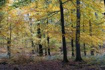 Dunkle Bäume mit buntem Laub by Ronald Nickel