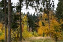 Bunte Farben im Mischwald by Ronald Nickel