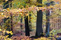 Das bunte Laub im Herbstwald by Ronald Nickel