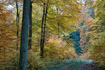 Herbststimmung im Mischwald by Ronald Nickel