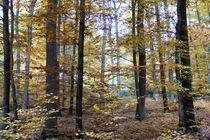 Herbstwald mit Buchen und Eichen by Ronald Nickel