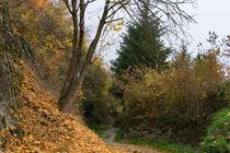 Auf dem Rheinsteig zur Herbstwanderung by Ronald Nickel