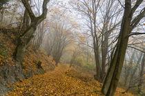 Durch den mystischen Wald by Ronald Nickel