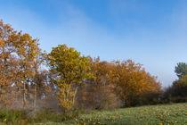 Nebel hängen noch zwischen den Bäumen by Ronald Nickel
