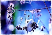 ~~ Frozen Nature Details ~~ by Sandra Vollmann