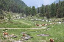 Südtirol von Heinz Seibl