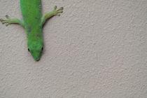 Gecko by stephiii