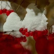 Snowberries - Schneeball überm Wasser von Chris Berger