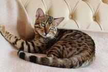 Leopardenkatze by inspiring-art