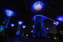 Gardens by the Bay in Singapore by night by stephiii