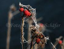 Frostgesicht by fotografiejanaschaefer
