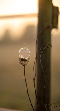 Blase am Stiel by Stephan Gehrlein