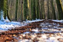 Wald Spaziergang  von Ria Kemken
