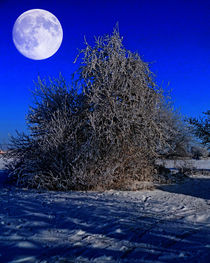 Snow and moon by Michael Naegele