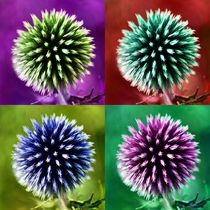 Pop Art Kugeldistel by kattobello