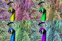 Pop Art Pfauen Balz by kattobello
