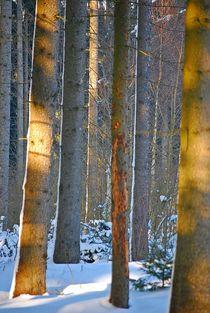 Winterwald... 1 von loewenherz-artwork