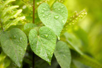 Raindrops - Symphony by Sylvia Seibl