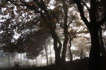 Mystischer Wald im Nebel by Ronald Nickel