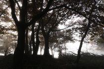 Silhuetten  im mystischen Wald by Ronald Nickel