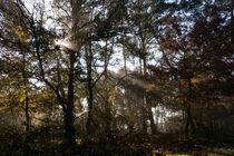Die Sonne betritt den mystischen Wald by Ronald Nickel