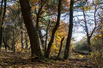 Der Herbst im naturnahen Wald by Ronald Nickel