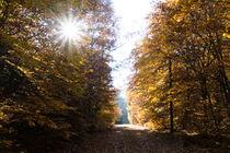 Die Sonne beherrscht den Herbstwald by Ronald Nickel