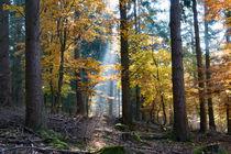 Spotlight im Herbstwald by Ronald Nickel
