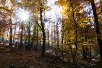 Sonnensein im Herbstwald by Ronald Nickel