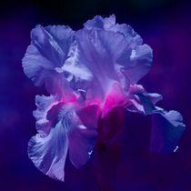 Space Lily von kattobello