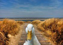Pekingente an der Nordseeküste von kattobello
