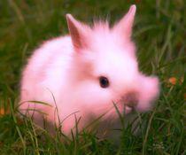 Pink Bunny by kattobello