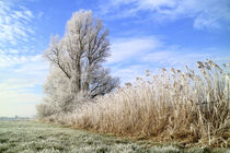 Frost in Ostfriesland by ropo13