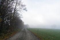 Im Herbstnebel an der Windschutzhecke von Ronald Nickel