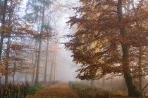 Mystischer Herbstwald im Nebel by Ronald Nickel