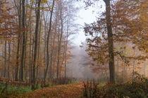 Durch den lichten Herbstwald im Nebel by Ronald Nickel
