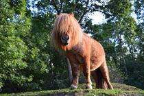 Pony by nature-spirit