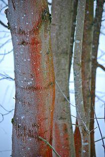 die Farben der Bäume... von loewenherz-artwork