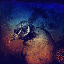 Abstract Peacock by AD DESIGN Photo + PhotoArt