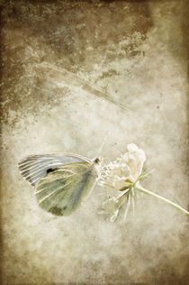 My little butterfly von AD DESIGN Photo + PhotoArt