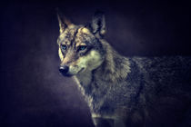 Wolf by AD DESIGN Photo + PhotoArt