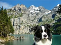 Border Collie vorm Öschinensee by kattobello