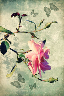 My rose by AD DESIGN Photo + PhotoArt