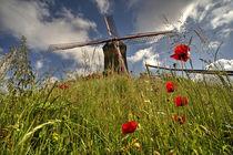 Windmill poppies  von Rob Hawkins