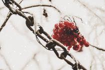 Snow chains - Schneeketten by Chris Berger