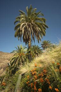 Tropical Palm  by Rob Hawkins